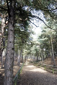 Formby Pinewoods Walks - 5th June